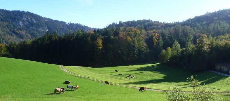 Kühe vor dem Haus